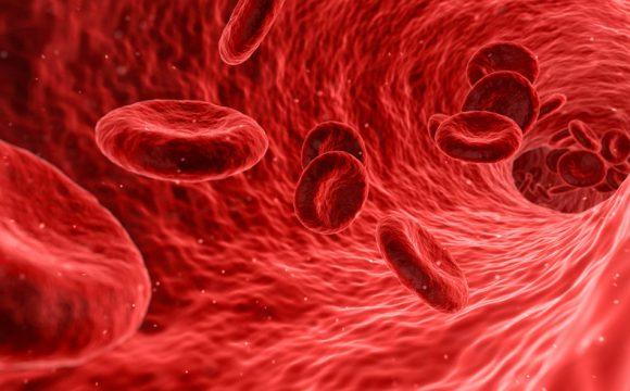 Folsäure in den Erythrozyten